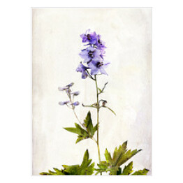 Watercolored delphinium