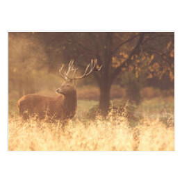 Red Deer Stag we mgle