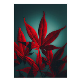 Japanese maple tree in crimson