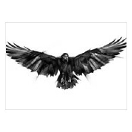 drawn flying bird raven on white background