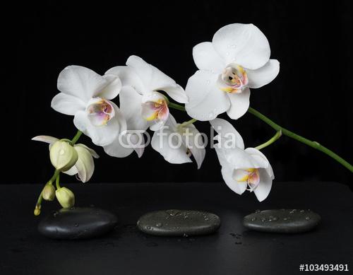 Biała orchidea na czarnym tle z kamyczkami
