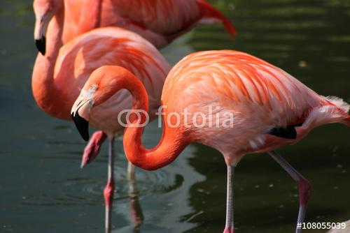 Flamingi w jeziorze
