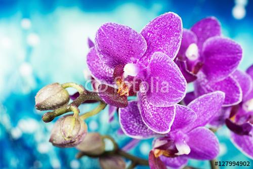 Orchidea w wielu odcieniach