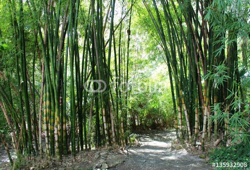 zielony bambusowy las