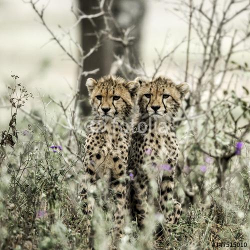 Gepardy W Parku Narodowym
