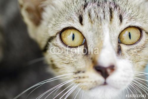 Wizerunek uroczego kota