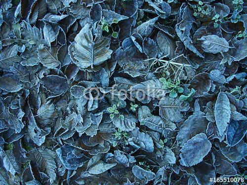 Zamarznięte liście