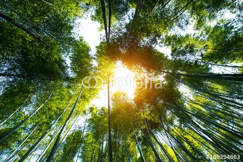 Bambusowy gaj, bambusowy las przy Arashiyama, Kyoto, Japonia