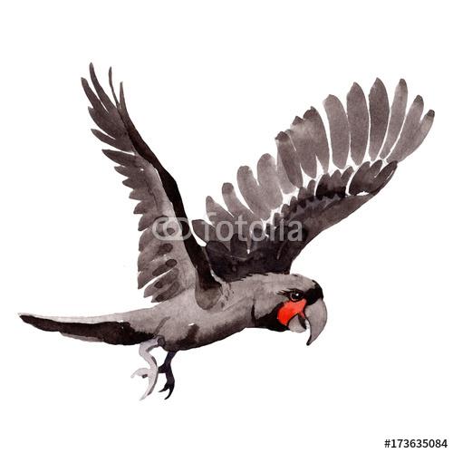 Niebo ary ptasia biała ara w przyrodzie akwarela stylu odizolowywającym. Dzika wolność, ptak z latającymi skrzydłami. Aquarelle ptak dla tła, tekstury, wzoru, ramy, granicy lub tatuażu.