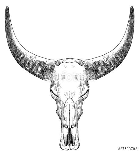 Czaszka byka z rogami
