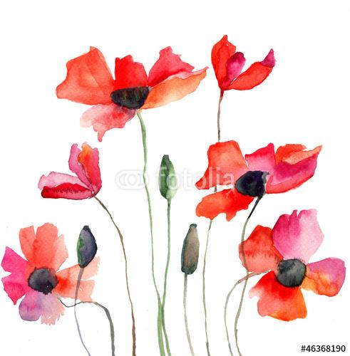 Kwiaty W Różnych Odcieniach Czerwieni