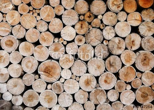 kłody drewna dla przemysłu