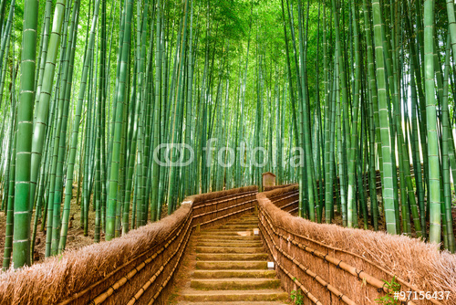 Kioto, Japonia Bambusowy las