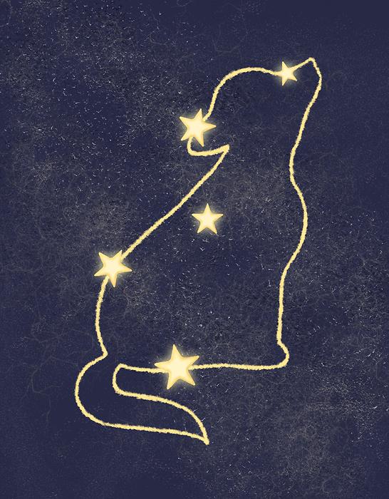 Plakat Z Wilkiem Gwiazdy
